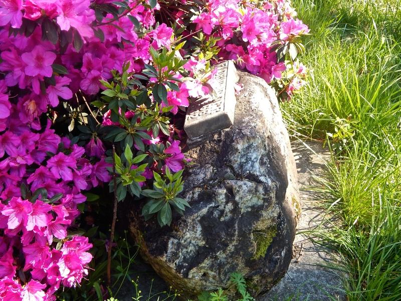 Emerging Stone